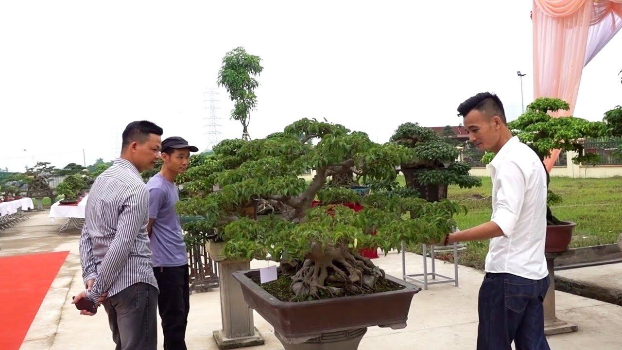 Giao dịch cây cổ 195 triệu. Em này mà động đến lại chết tiền - bonsai 195 million VND