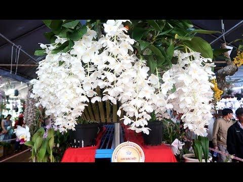 Giò thủy tiên trắng đẹp nhất năm giải đặc biệt Hội lan Lễ hội cà phê Buôn Ma Thuột