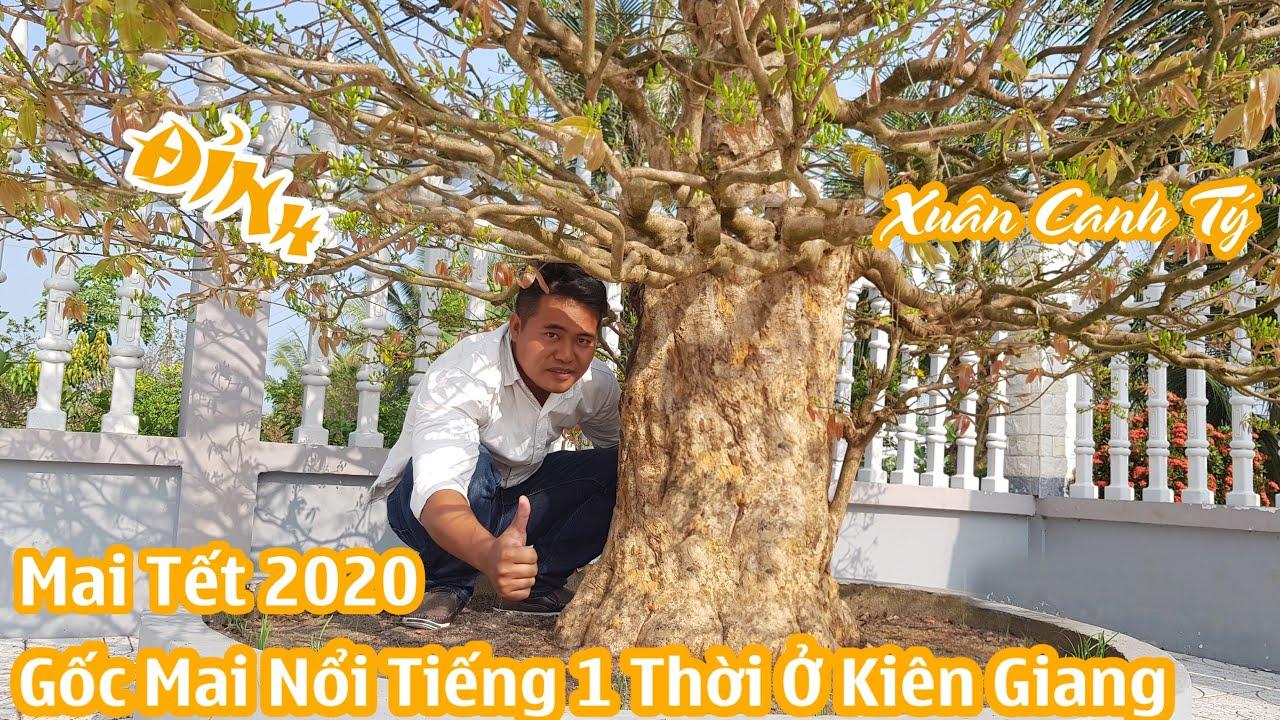 Gốc mai chơi tết 2020 ĐỈNH nhất Kiên Giang có gì đặc biệt 0947776724