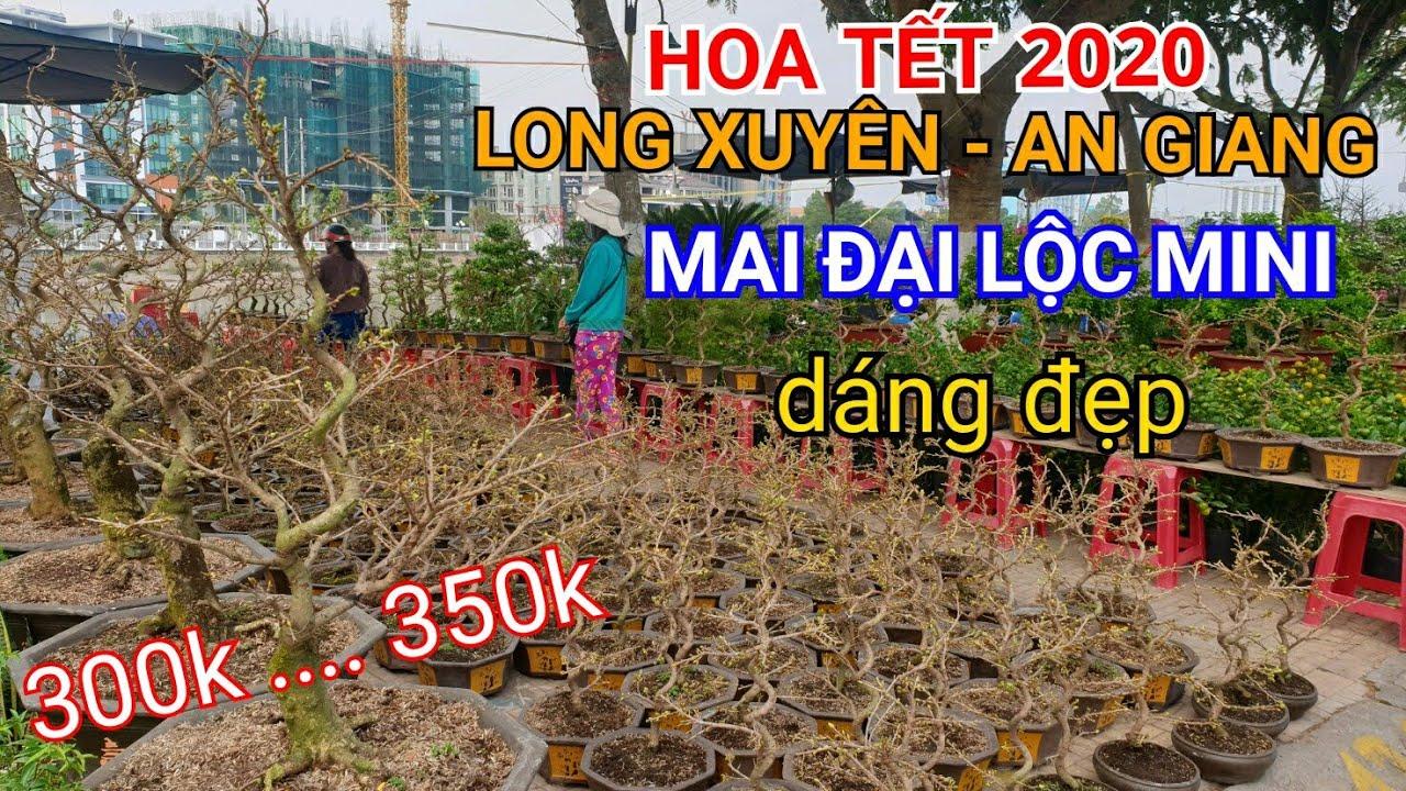 HOA TẾT 2020 | MAI ĐẠI LỘC MINI giá dễ chơi CHỢ HOA LONG XUYÊN | Bonsai miền tây