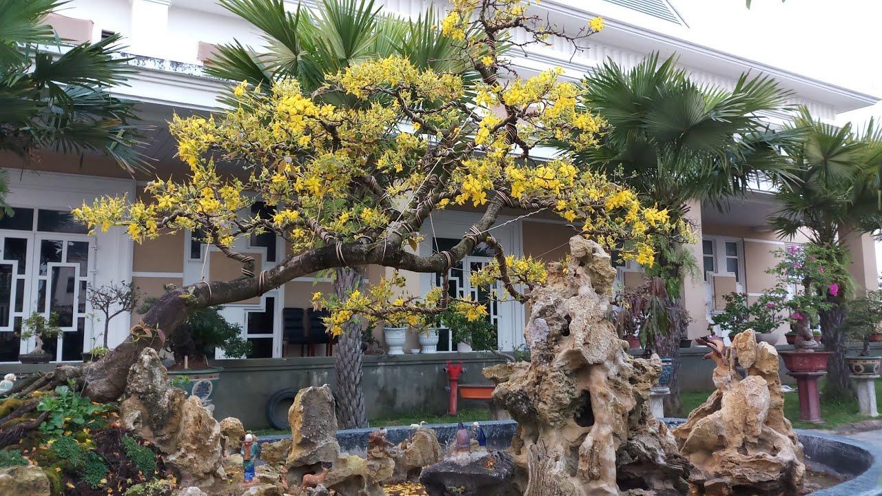 HV 340.Nhà vườn Bonsai đẹp tại khách sạn bàn thạch quảng nam