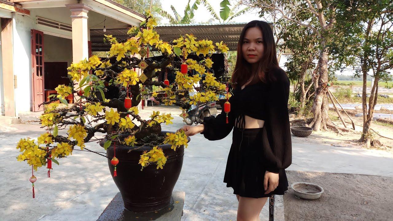 HV 346.giao lưu cây mai bonsai đẹp ở vùng quê quảng nam