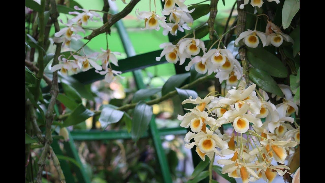 Hoàng Phi Hạc - Lan Rừng Nở Vào Mùa Xuân