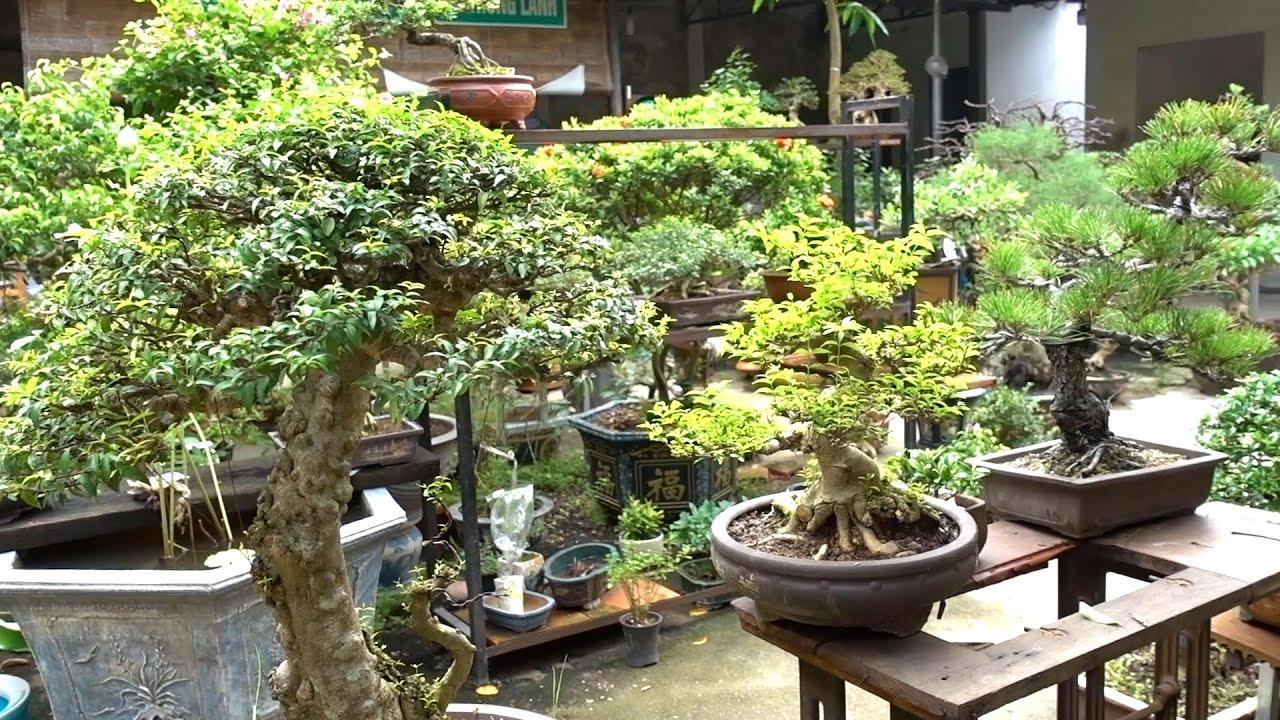 Hỏi giá từ cây rẻ tiền cho tới hàng nghệ thuật đỉnh cao, cây nhập ngoại - bonsai trees