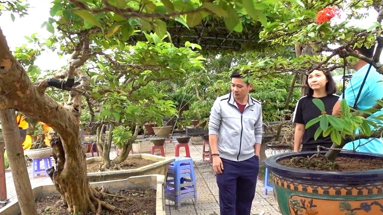 Khách giật mình vì báo giá khế cụ rẻ hơn tưởng tượng - cheap and beautiful bonsai trees in Long Bien