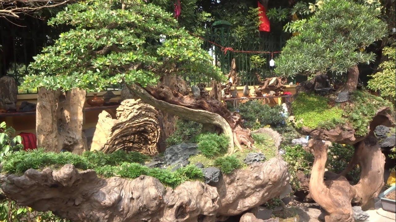 Linh sam được bình chọn TOP 3 giá 350 triệu, đồng giá linh sam đẹp 2,5 triệu - Top 3 bonsai tree