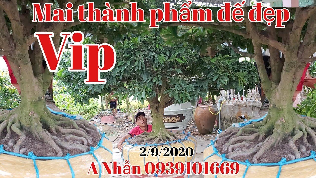 Lô Mai đế siêu đẹp chào xuân 2021 gặp A Nhẫn 0939101669 xã 3sao huyện Cao Lãnh Đồng Tháp