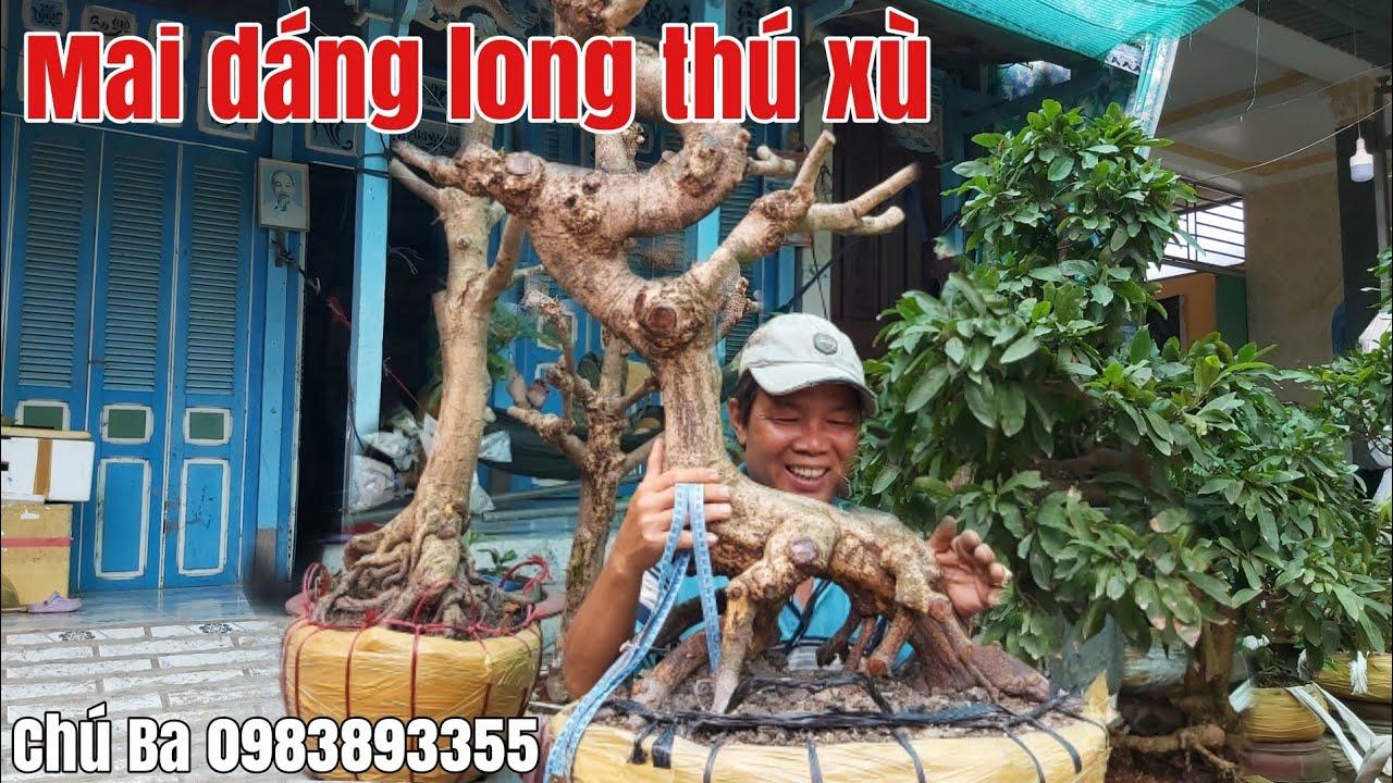 Lô Mai xù, dáng long giá hữu nghị gặp Chú Ba 0983893355