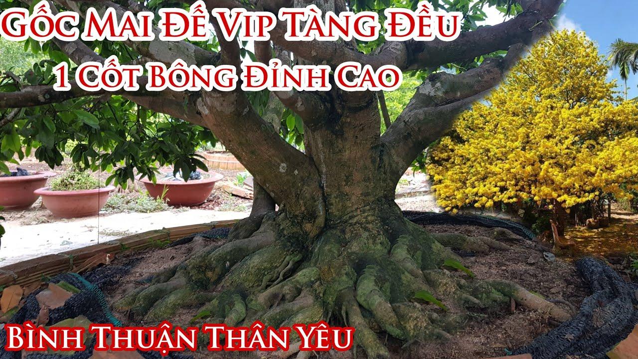"""Lô mai """"Đế Hơi Bị Khủng"""" tàng Vip của anh Tâm Bình Thuận 0794851565"""
