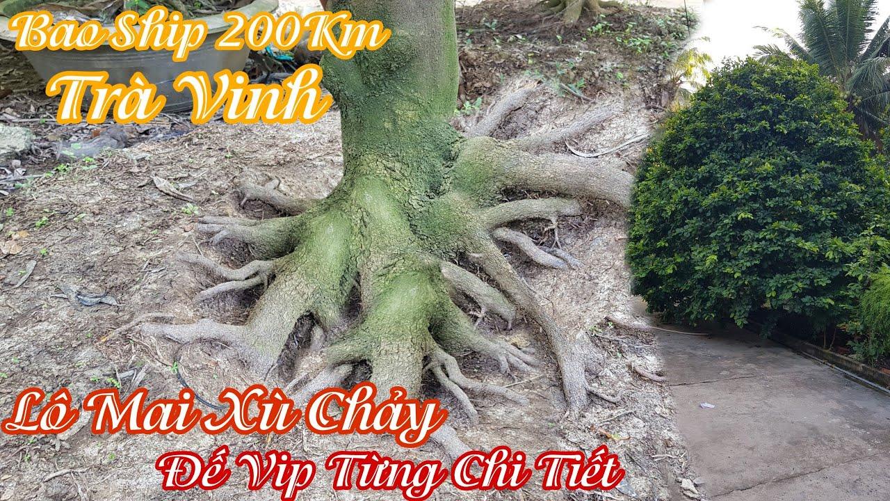 """Lô mai """"XÙ CHẢY"""" đế """"HƠI BỊ VIP"""" của anh Dương Trà Vinh 0942171757"""