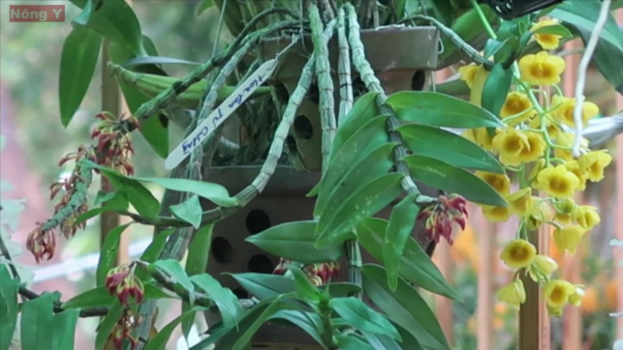 Loài lan mới lạ, không biết tên gây nhiều tranh cãi