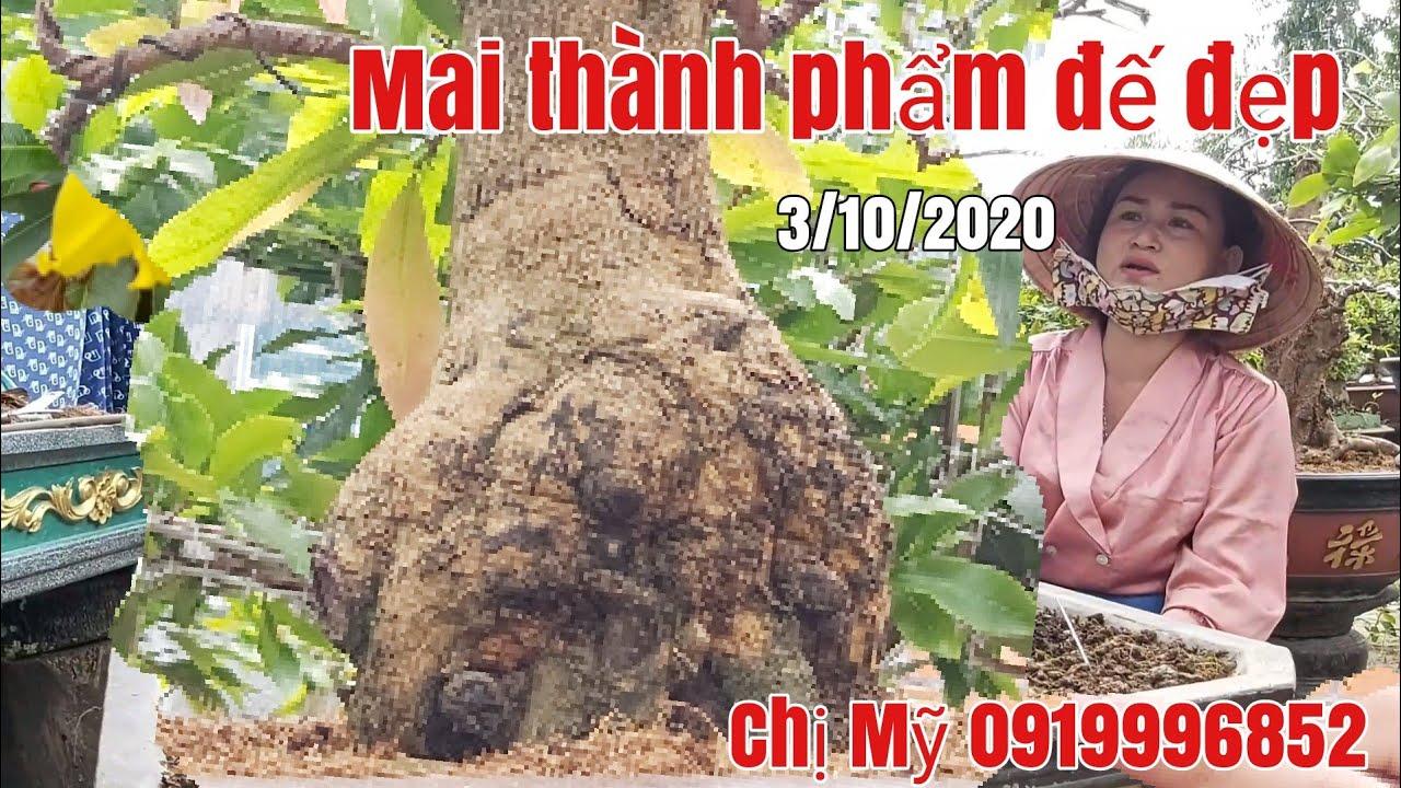 Mai thành phẩm bon sai giá hữu nghị gặp chị Mỹ 0919996852 Phú Tân AG