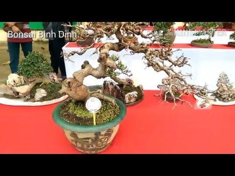 Nghệ thuật bonsai mini
