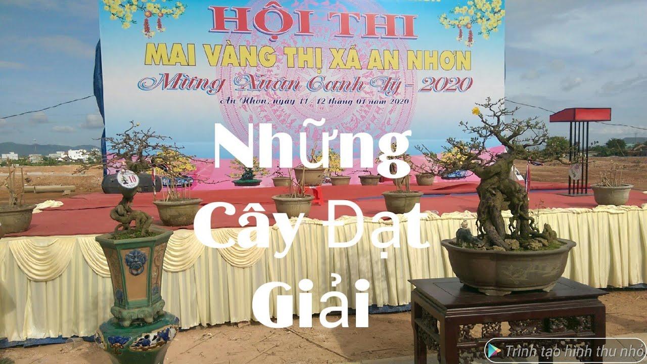 Những Cây Mai đạt giải tại hội thi Mai Vàng An Nhơn, Bình Định