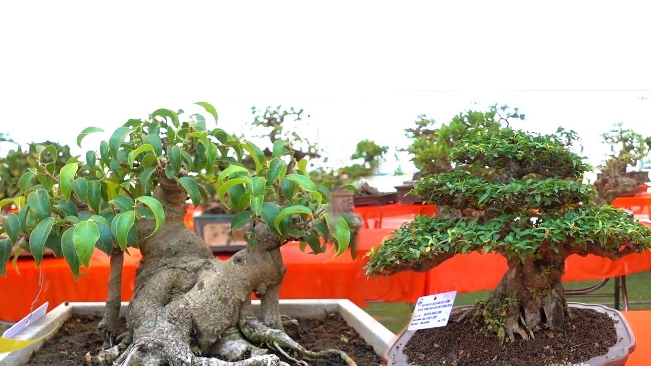 Những em nhỏ bé nhưng độ nét rất cao - beautiful mini bonsai
