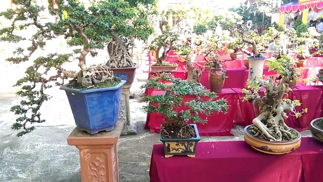 Phần 2- Chi tiết triễn lãm sinh vật cảnh Tây Sơn 11-2018-Bonsai Binh Dinh