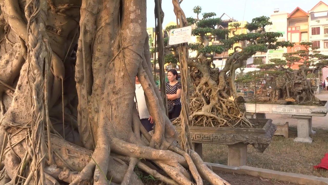 Quá lạ những cây khủng nhất triển lãm Thái Bình là của Nữ - super trees of women