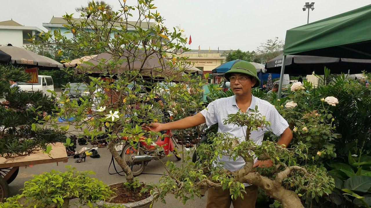 SH.2576.Anh bạn tôi mua được cây Dành Dành này 700K  rất già,báo giá nhiều loại cây khác chợ Sơn Tây