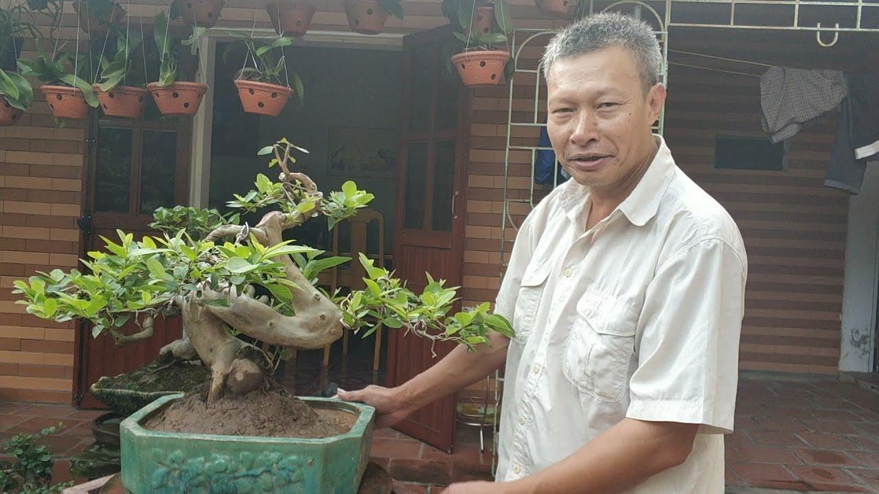 SH.3188.Hương sắc Đỗ Sinh sẽ có cây Ổi chữ Tâm trình làng đầu xuân mới 2020.