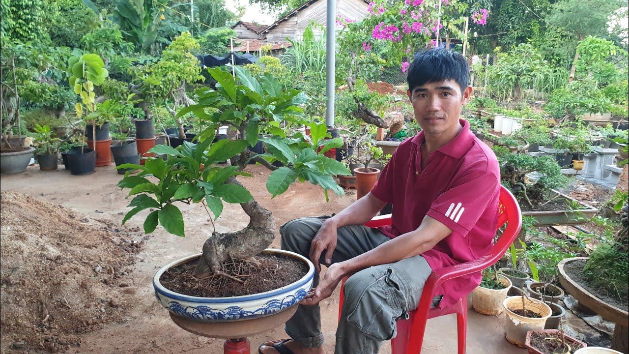 SH.3210.Báo giá 800K cây Sanh mini đẹp vườn anh Trần Thanh, Cư Jut.Đắk Nông.