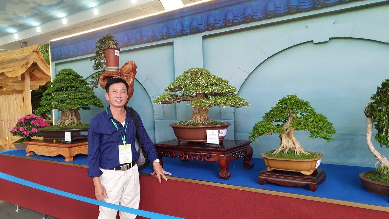 SH.3298.Cây Si dáng đổ đẹp tại Festival Bonsai Châu Á Thái Bình Dương. Suối Tiên. TPHCM