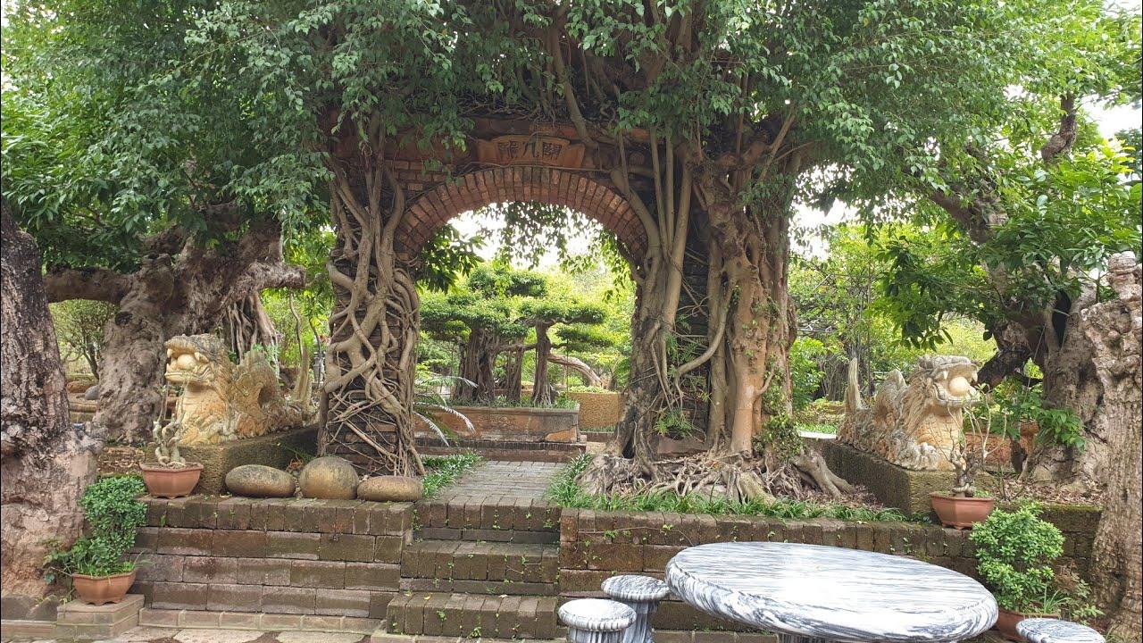SH.3352.Thăm vườn cây cổ đặc biệt và những chiếc bể bằng Đá Ong hiếm gặp .