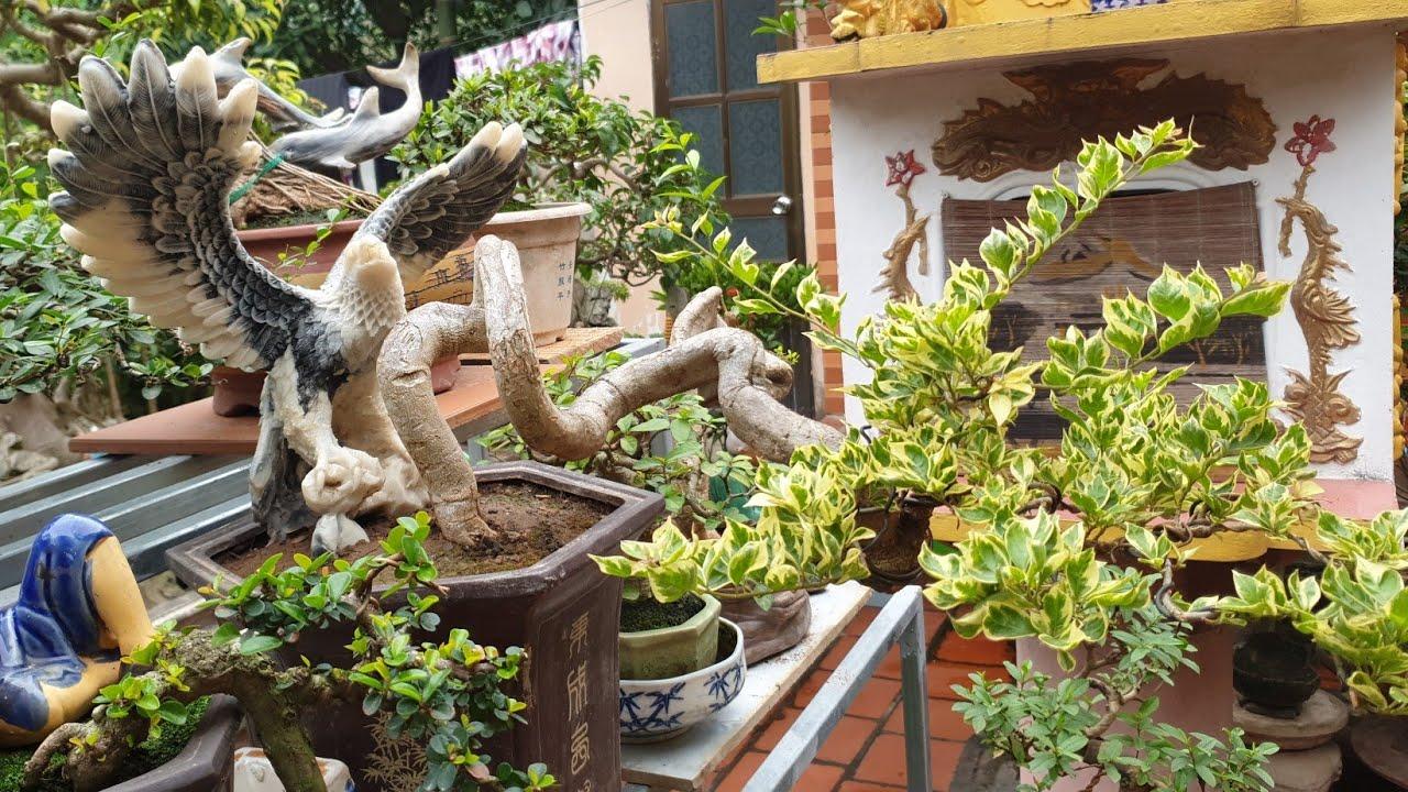 SH.3531.Hương sắc Đỗ Sinh chia sẻ vườn nhà với lời chúc bình an hạnh phúc tới mọi nhà.