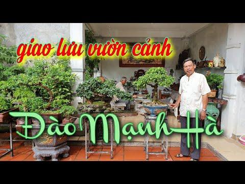 SH.4035. Giao lưu với vườn cảnh đẹp cụ Đào Mạnh Hà phường Kỳ Bá tp Thái Bình.