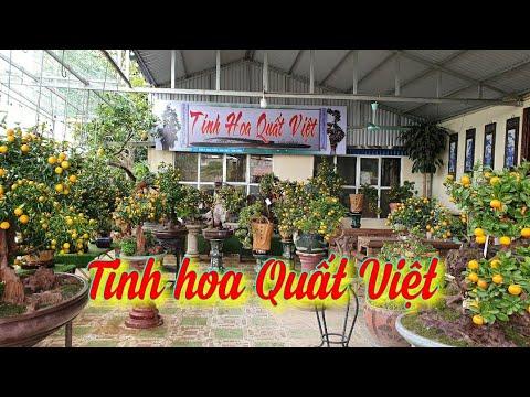 SH.4673. Bất ngờ với Tinh hoa Quất Việt tại Châu Giang Bonsai xóm 2 xã Nam Toàn Nam Trực Nam Định.