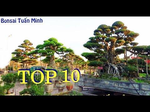 TOP 10 CÂY ĐẸP NHẤT VN, được bình chọn tại đại lễ 1000 năm Thăng Long .