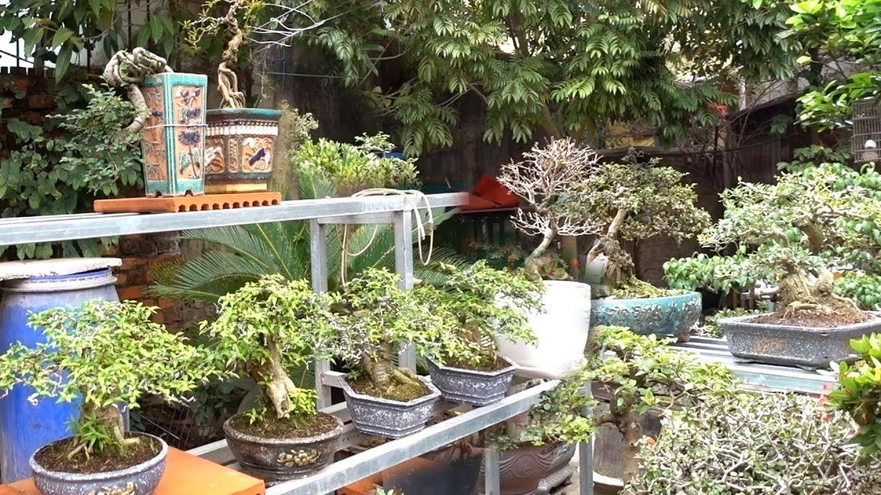 Vài trăm nghìn là có cây tuyệt đẹp, độc đáo để chơi. Báo giá nhiều cây cảnh đẹp. Beautiful bonsai