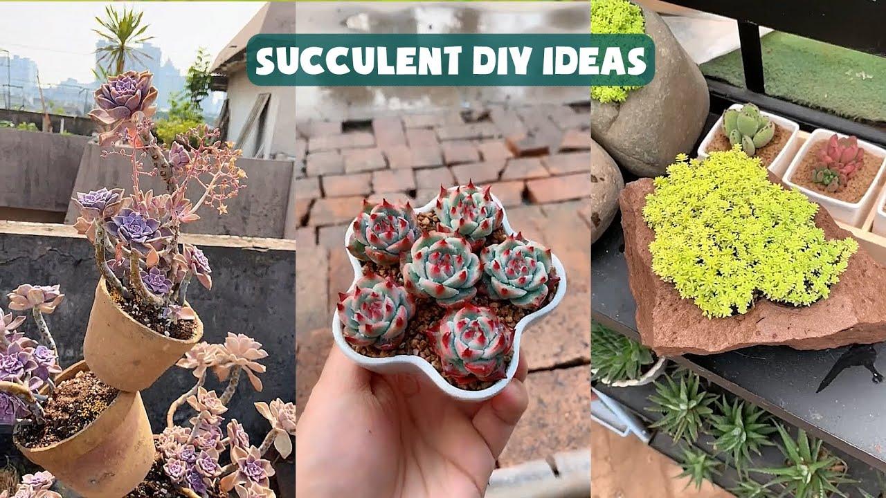 10 Succulent DIY Ideas| 10 Ý tưởng trang trí sen đá tuyệt đẹp| 多肉植物| 다육이들 | Suculentas
