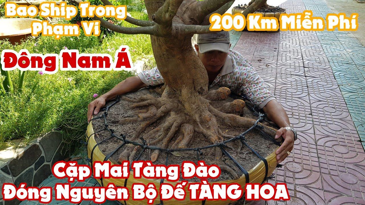 """Cặp mai tàng đào đóng """"BỘ ĐẾ TÀNG HOA"""" tại Trà Vinh"""
