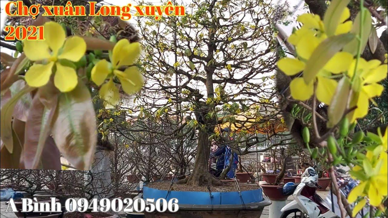 Cây Mai tàng siêu bông tại chợ xuân Tp Long xuyên gặp A Bình 0949020506