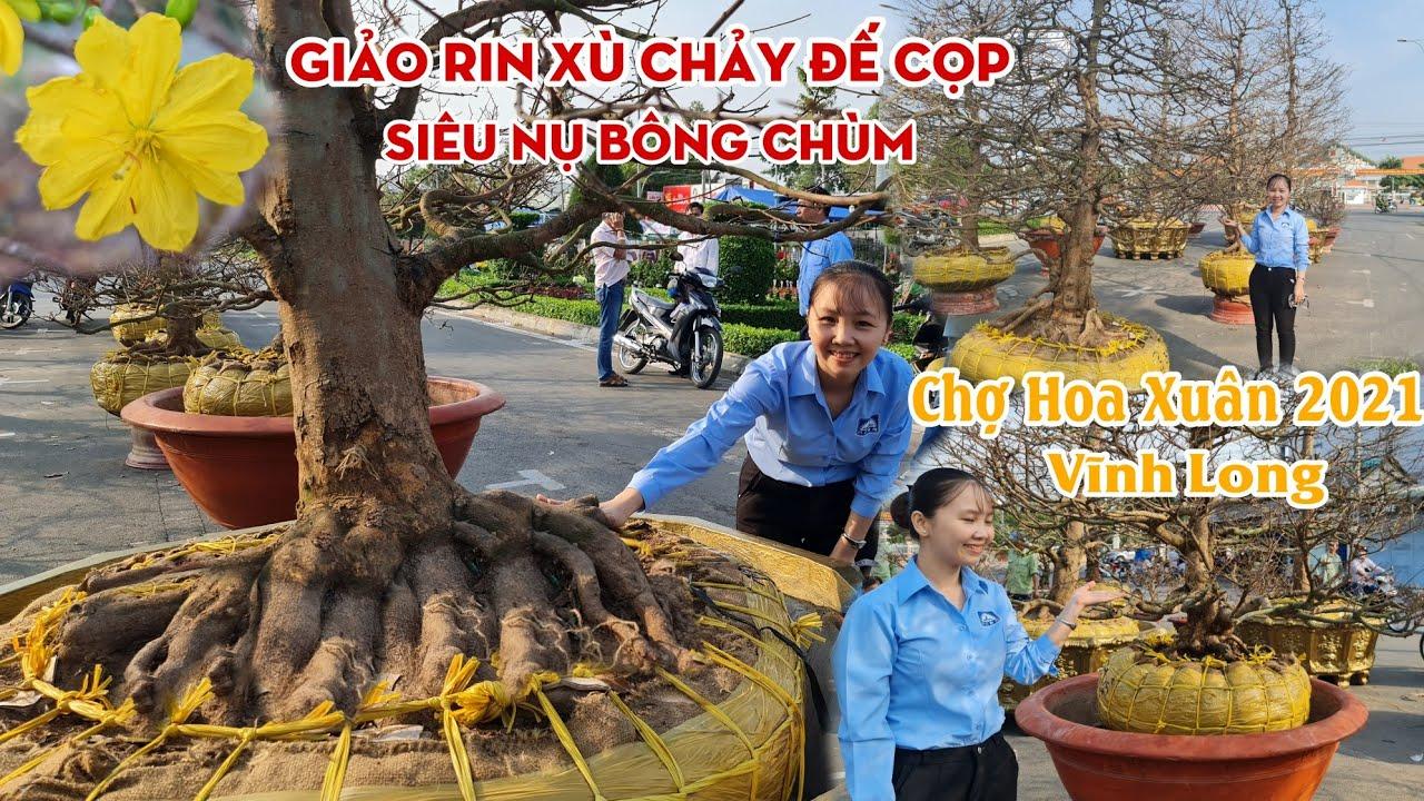Chợ hoa xuân 2021 MAI XÙ CHẢY BÍT MÌNH đế siêu VIP ở Vĩnh Long 0939892929