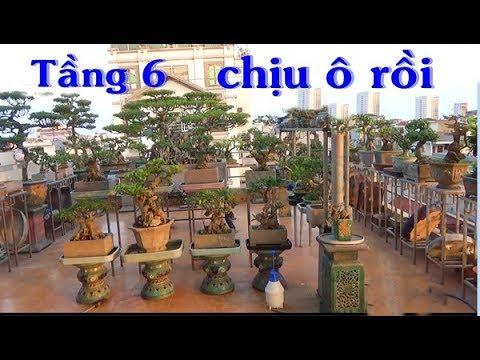 Có 9m trên sân thượng tầng 6 mà vài tỷ tiền cây, đủ biết tay chơi bonsai đẳng cấp.