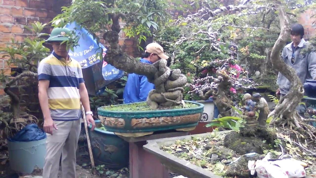 Giao dịch thành công nữa vườn cây siêu khủng ở Quảng Nam