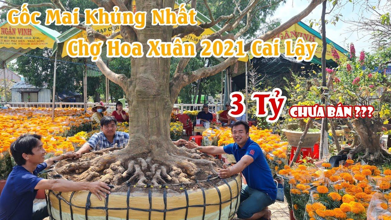 Gốc mai SIÊU KHỦNG GIÁ 3 TỶ tại CHỢ HOA XUÂN 2021 ở Cai Lậy 0985108639