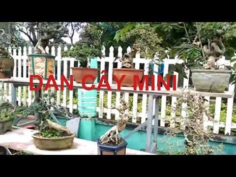 Lại Tiếp tục những cây mini rất đẹp - Bonsai Binh Dinh