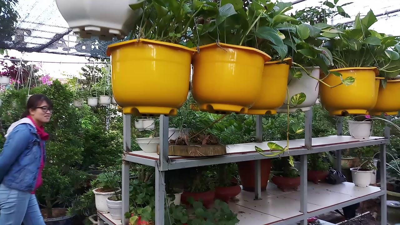 Nhà vườn ba thơi. Chuyên cung cấp cây trồng quanh nhà 0915685139