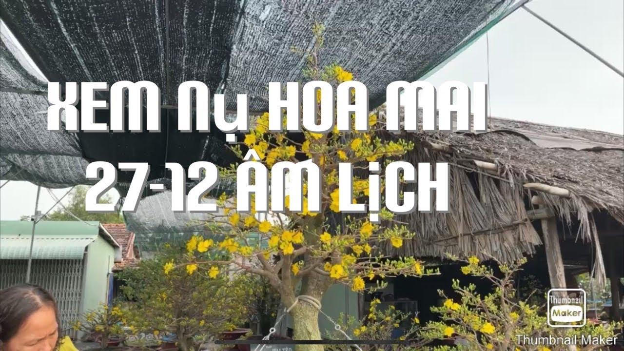 Xem nụ hoa mai 27-12 âm lịch 8-2-2021