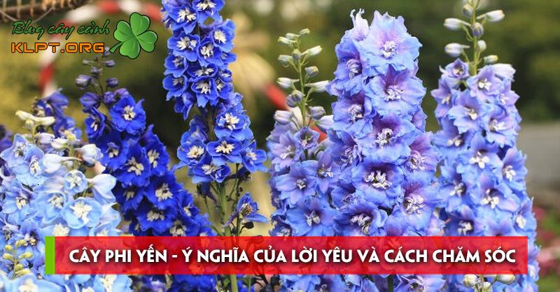 cay-phi-yen-y-nghia-cua-loi-yeu-va-cach-cham-soc