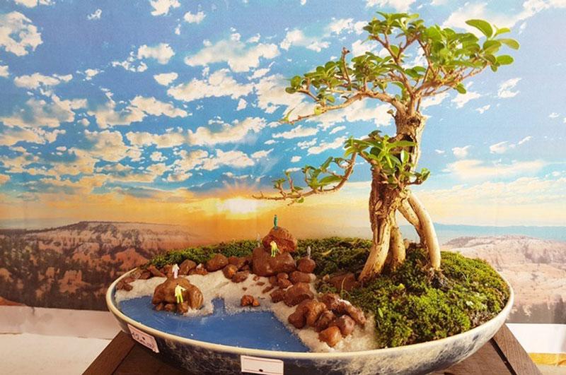 nguoi-dan-ong-nha-trang-so-huu-hang-nghin-bonsai-tieu-canh-mini-2