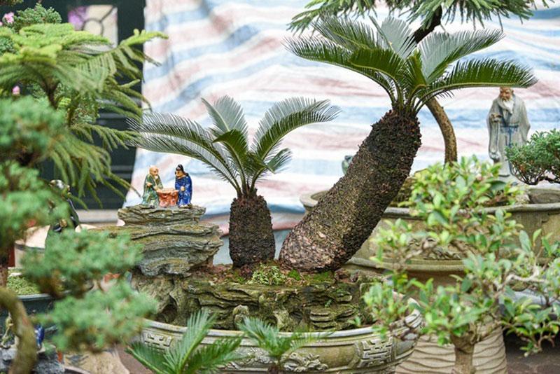 van-tue-bonsai-mini-choi-tet-gia-chuc-trieu-dong-o-ha-noi-1