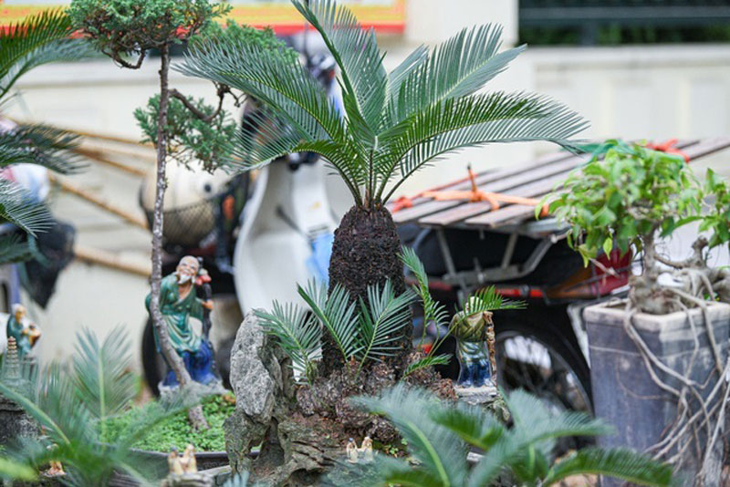 van-tue-bonsai-mini-choi-tet-gia-chuc-trieu-dong-o-ha-noi-5