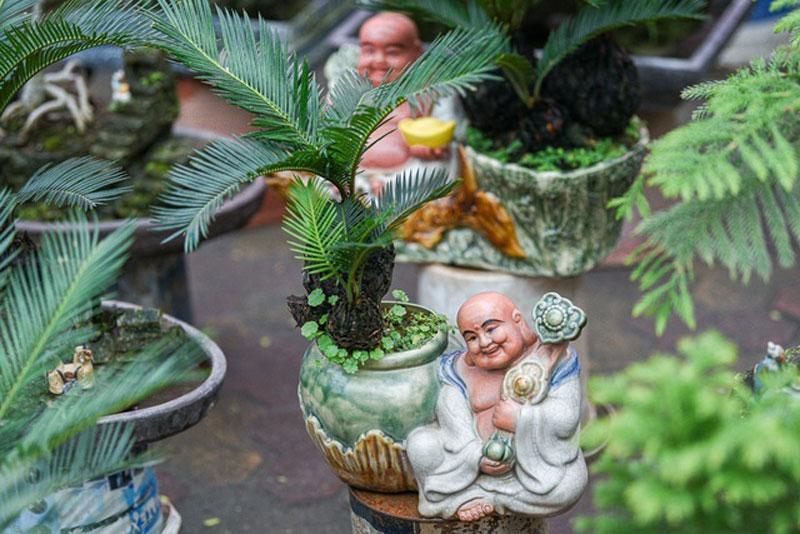 van-tue-bonsai-mini-choi-tet-gia-chuc-trieu-dong-o-ha-noi-6