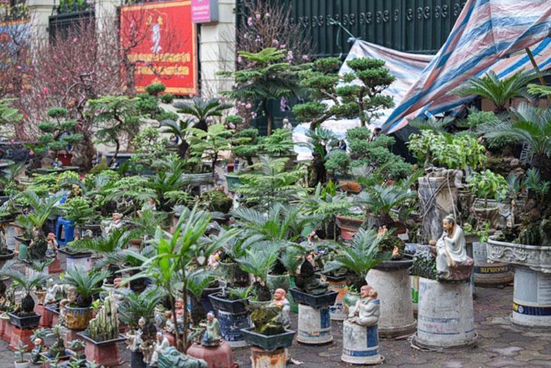 van-tue-bonsai-mini-choi-tet-gia-chuc-trieu-dong-o-ha-noi-7