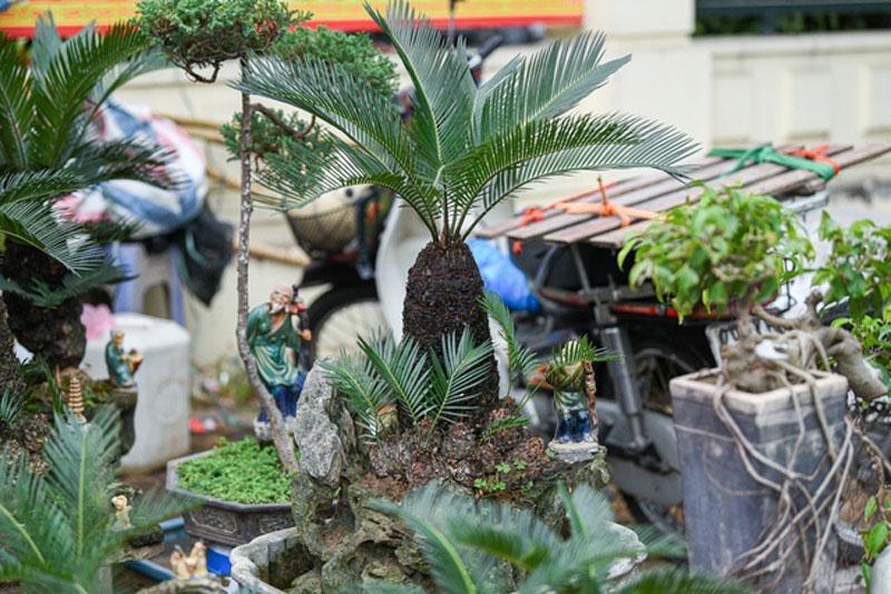 van-tue-bonsai-mini-choi-tet-gia-chuc-trieu-dong-o-ha-noi-8