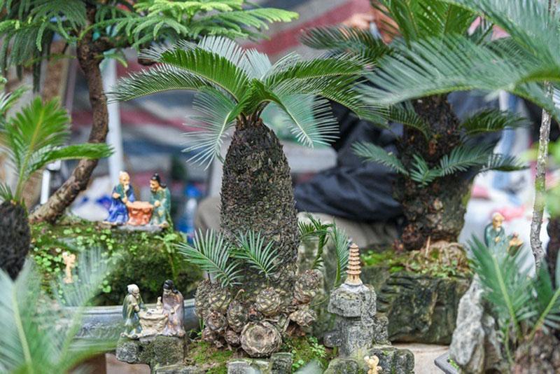 van-tue-bonsai-mini-choi-tet-gia-chuc-trieu-dong-o-ha-noi-9