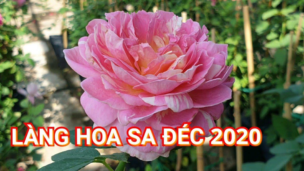 LÀNG HOA SA ĐÉC 2020 - khám phá các giống hồng tuyệt đẹp tại sa đéc - Bonsai miền tây